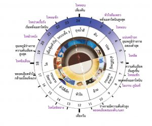 What is biological clock in human body?